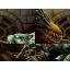 Open HHF Warcraft 3: Map image